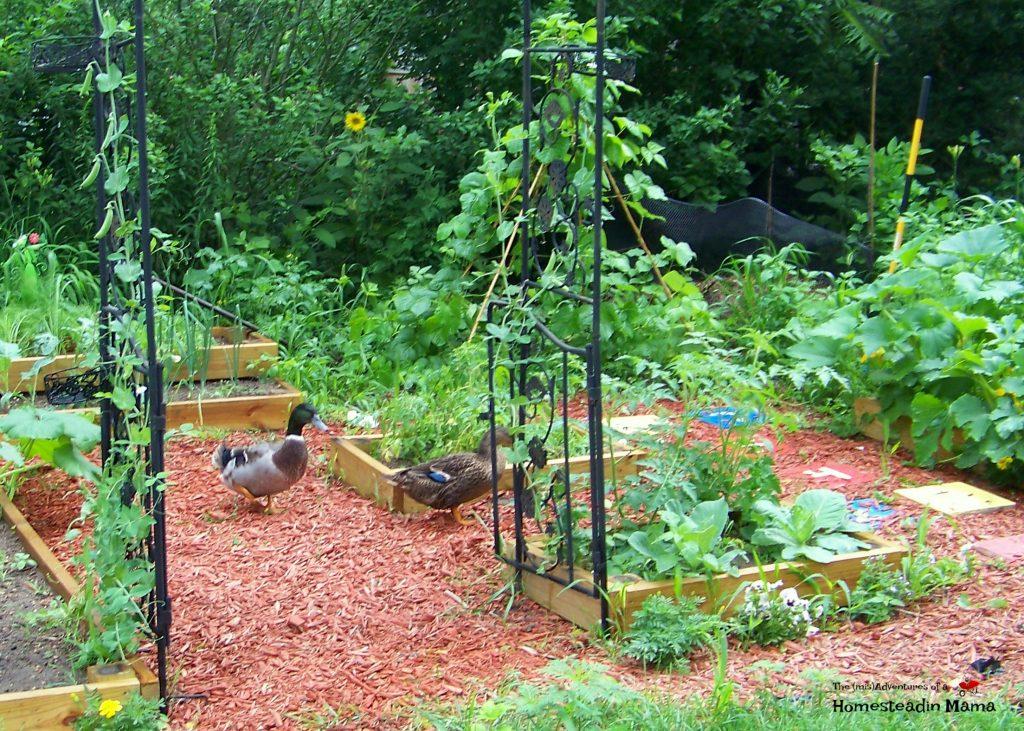 starter garden