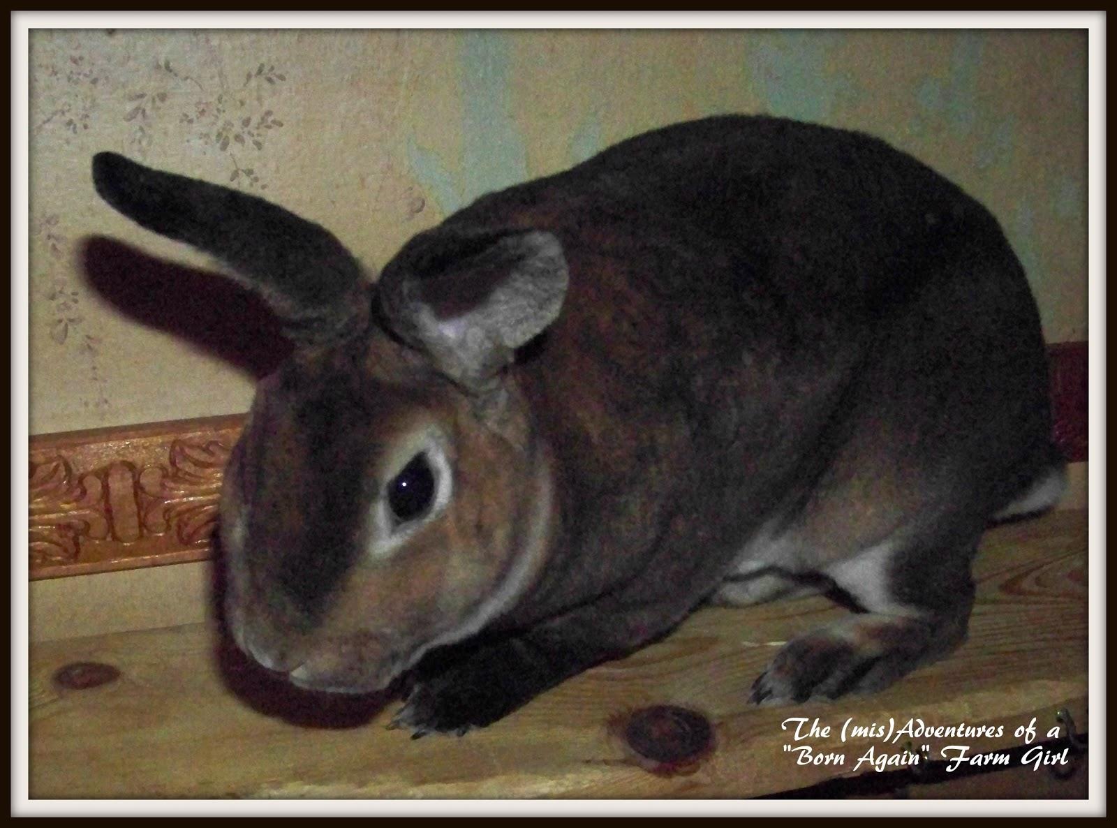 Visiting a rabbit show