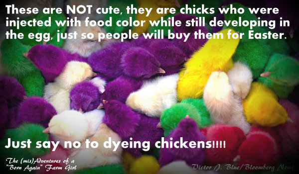 Chicks are not toys…..