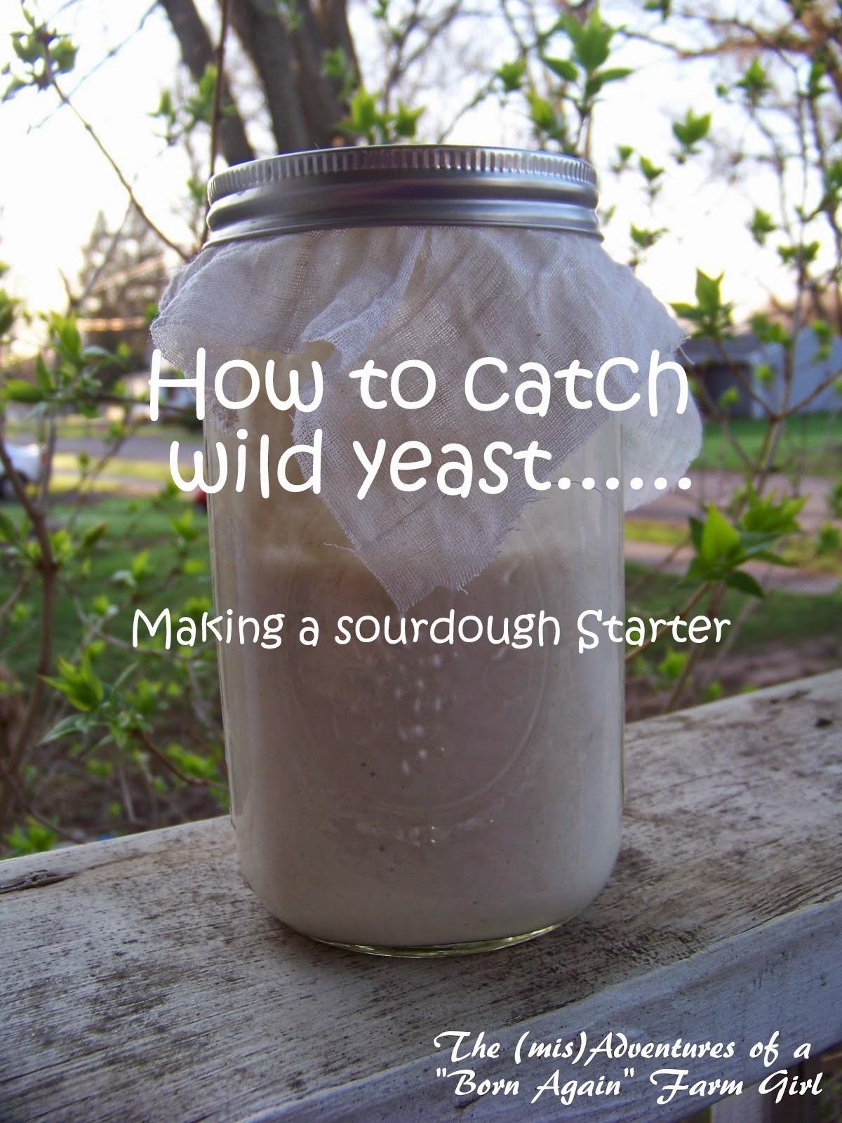 Catching Wild Yeast