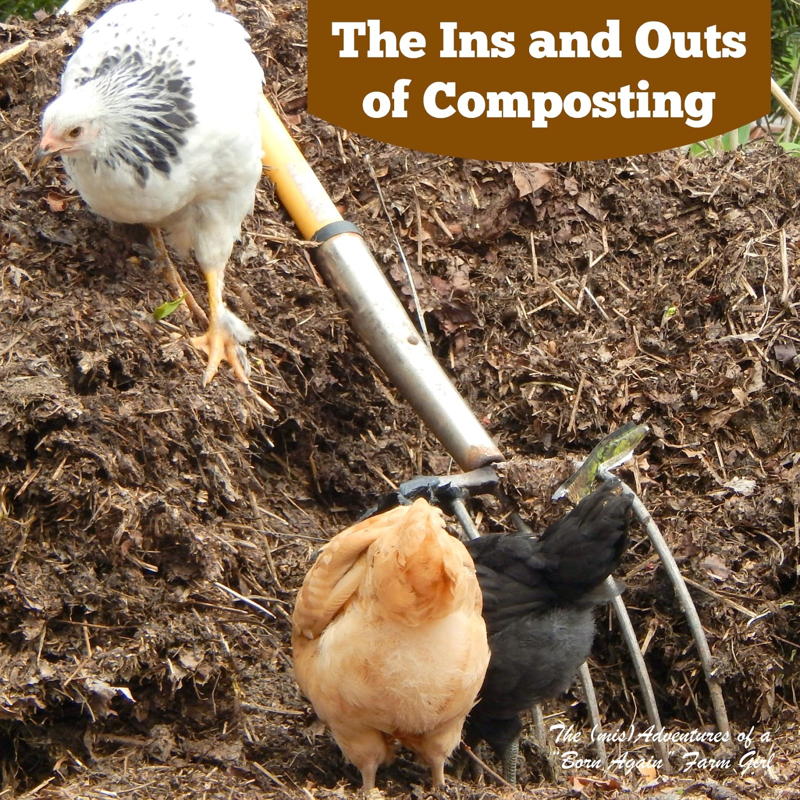 The Ins and Outs of Composting