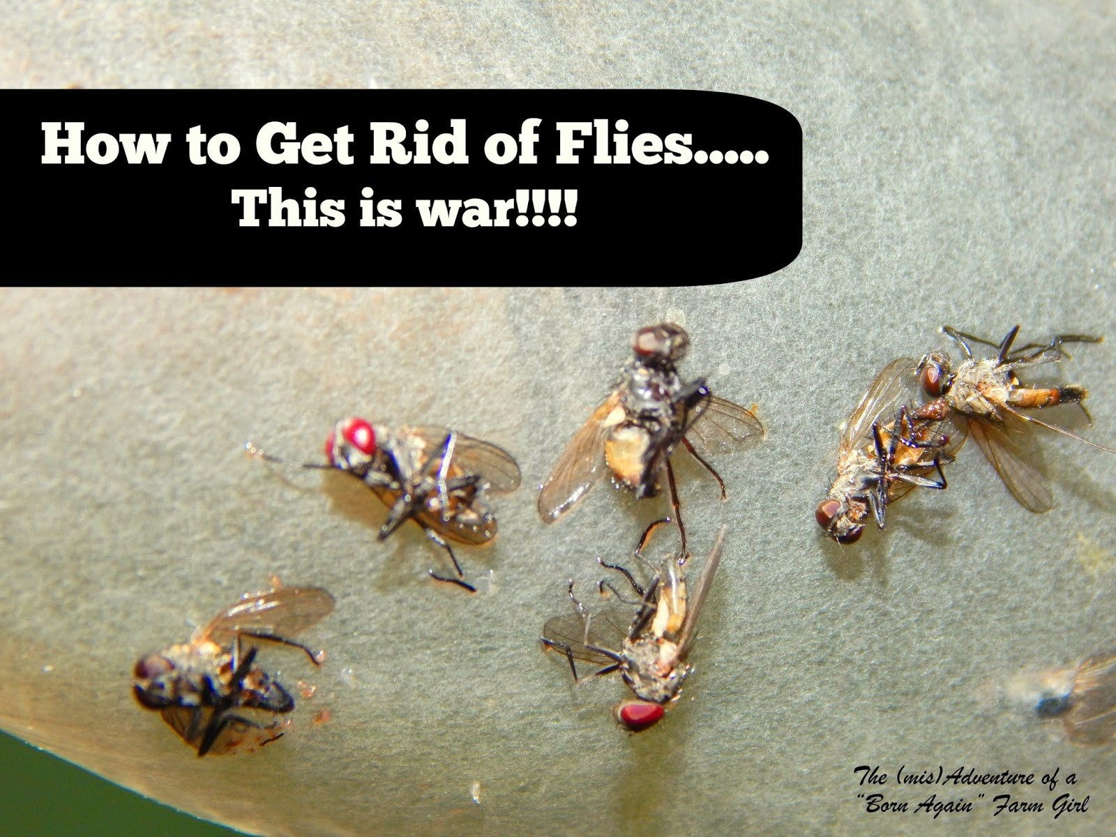 How to Get Rid of Flies… This is War!!!