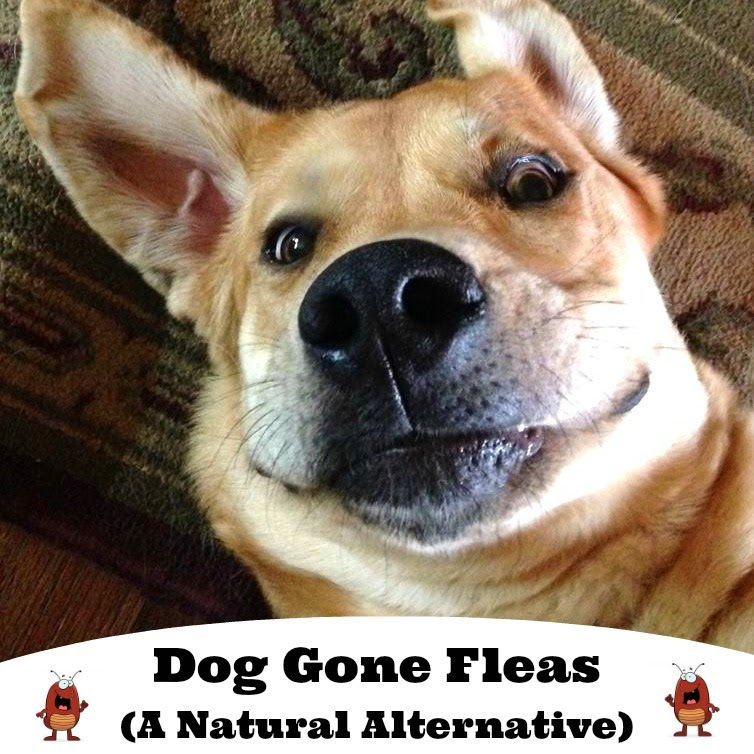 Dog Gone Fleas (A Natural Alternative)