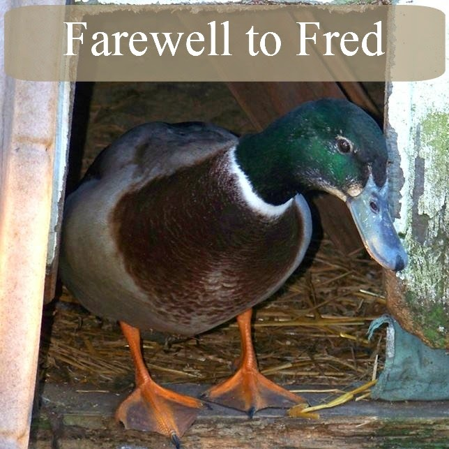 Farewell to Fred
