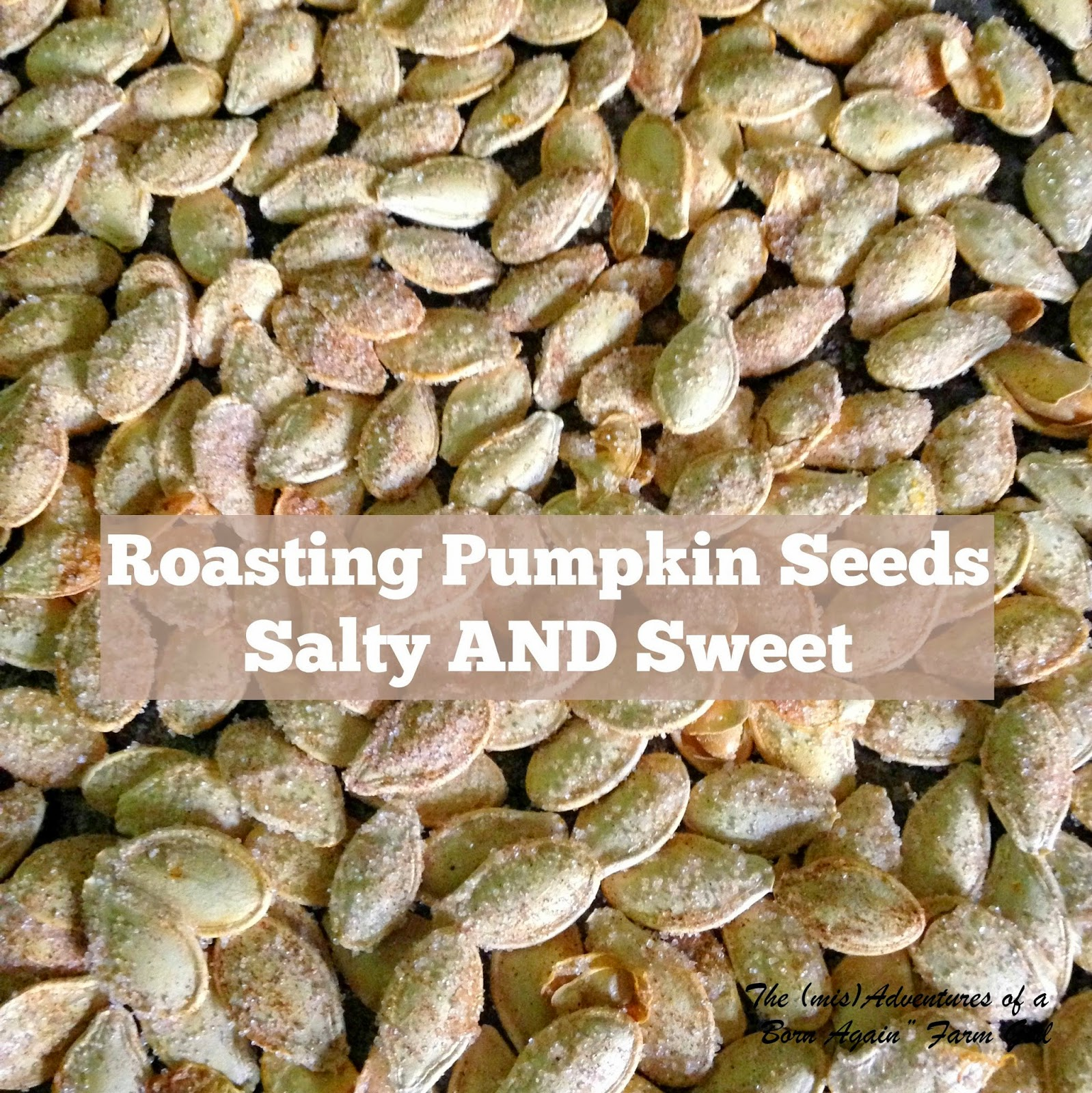 Roasting Pumpkin Seed, Salty AND Sweet