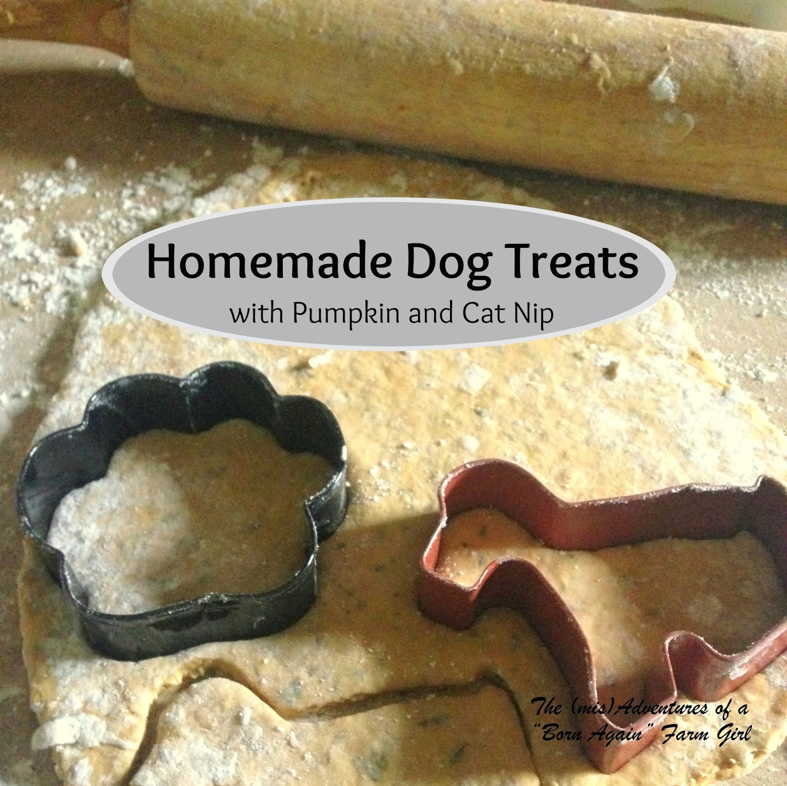 Homemade Dog Treats, with Pumpkin and Cat Nip!
