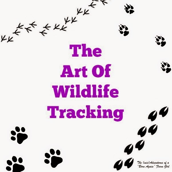 The Art Of Wildlife Tracking