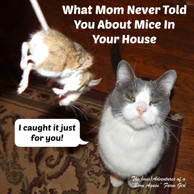 What Mom Never Told You About Mice In Your House