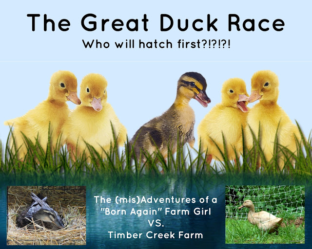 The Great Duck Race!!!