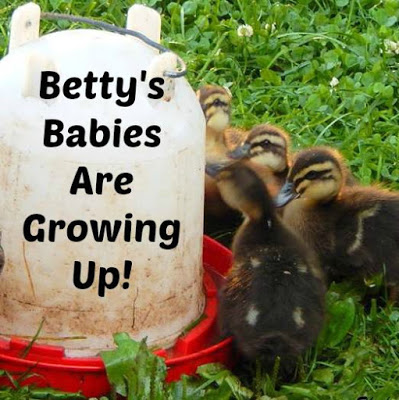 Betty's Babies Are Growing Up!