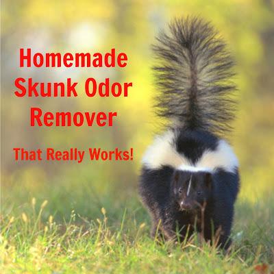Homemade Skunk Odor Remover