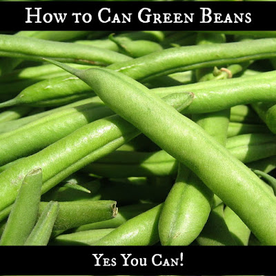 How to Can Green Beans. Yes You Can!