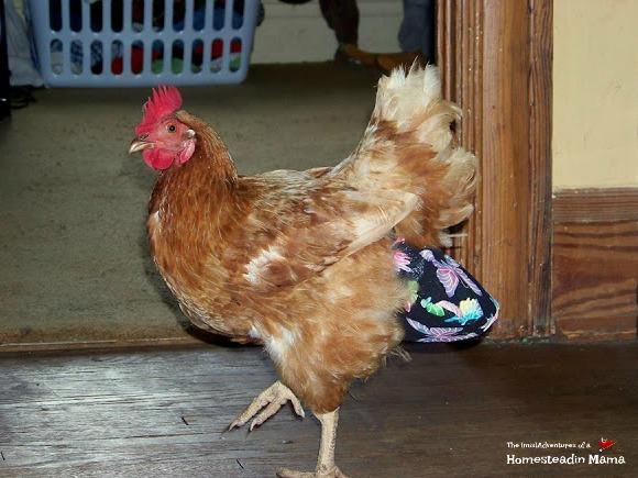 chicken in a diaper