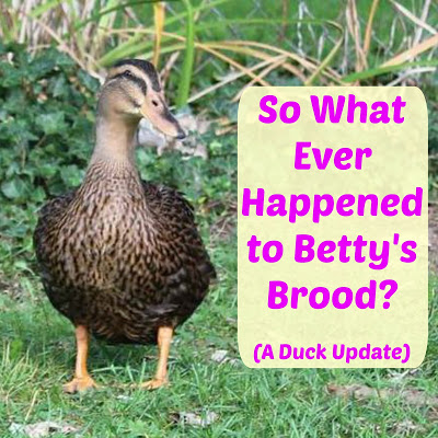 So What Ever Happened to Betty's Brood? (A Duck Update)
