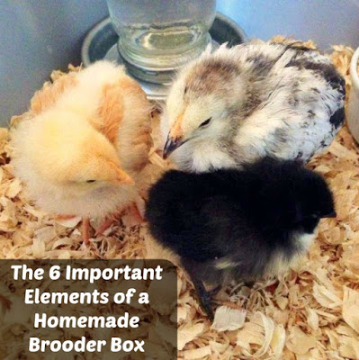 The 6 Important Elements of a Homemade Brooder Box