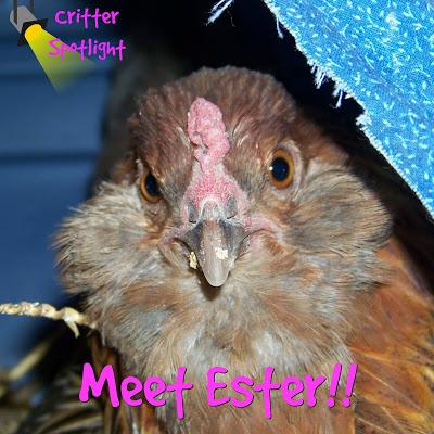 Meet Ester!!