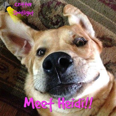 Meet Heidi the Homestead Hound