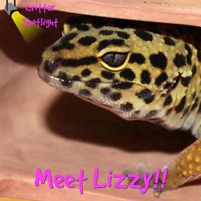 Meet Lizzy