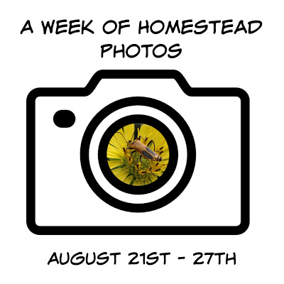 A Week of Homestead Photos August 21st – 27th