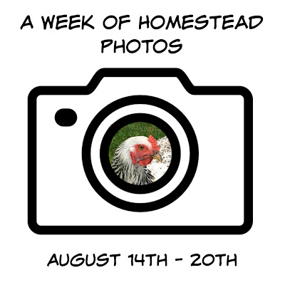 A Week of Homestead Photos August 14th – 20th
