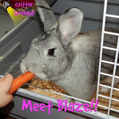 Meet Blaze