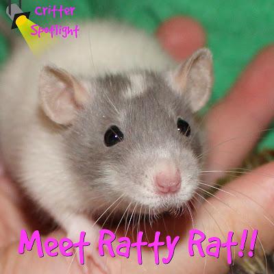 Meet Ratty Rat