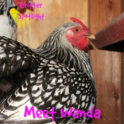 Meet Wanda