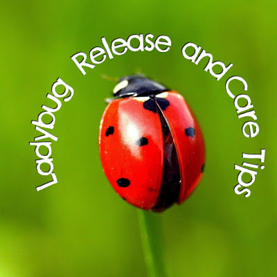 Ladybug Release and Care Tips
