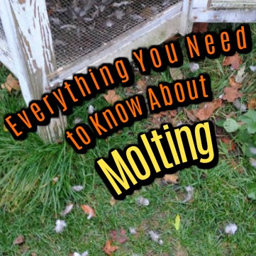 Everything You Need to Know About Molting
