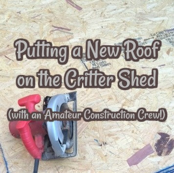 Putting a New Roof on the Critter Shed