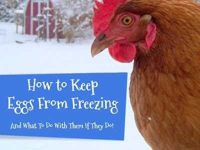 how to keep eggs from freezing