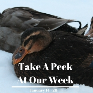 take a peek at our week