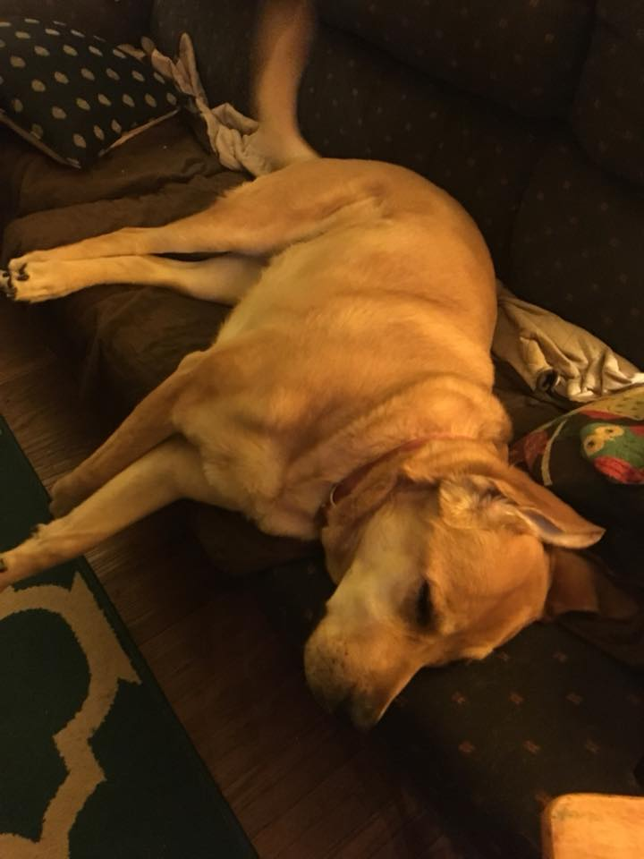 heidi the homestead hound