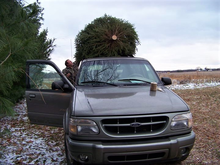 Getting your tree home and into water