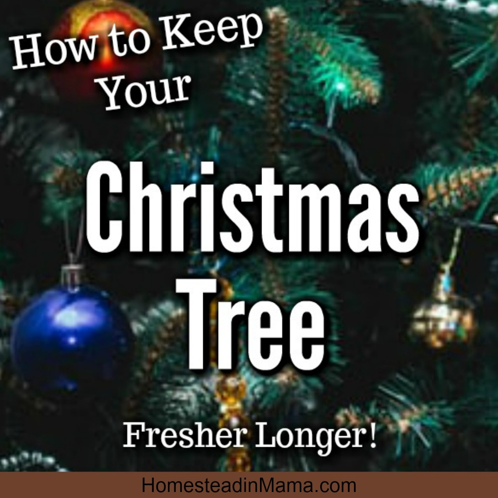 Christmas tree fresher longer